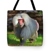 Baboon Stalking Tote Bag