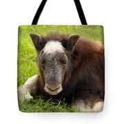 Baby Alaskan Musk Ox Tote Bag