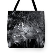 Baby Alligators On Board Tote Bag