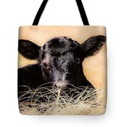 Baby Angus Calf  Tote Bag
