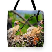Baby Anhinga Chicks Tote Bag