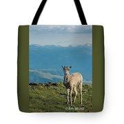 Baby Big Horn Sheep Tote Bag
