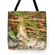 Baby Bird Alone Tote Bag