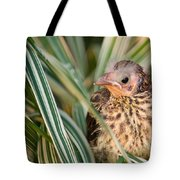Baby Bird Peering Out Tote Bag