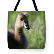 Baby Canadian Tote Bag