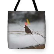 Baby Cardinal  Tote Bag