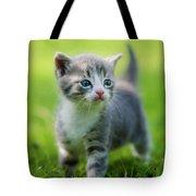 Baby Cat Tote Bag