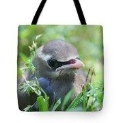 Baby Cedar Waxwing Tote Bag