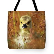 Baby Cuteness - Young Canada Goose Tote Bag