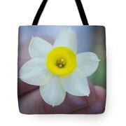 Baby Daffodil Tote Bag