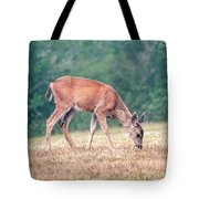 Baby Deer Walking On Grass By Forest Tote Bag