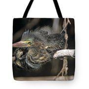 Baby Green Heron Resting On A Branch Tote Bag