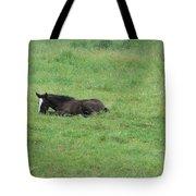Baby Horse Tote Bag