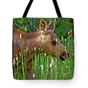 Baby Moose Tote Bag