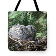 Baby Morning Dove Tote Bag