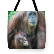 Baby Orangutan Clinging To His Mother Tote Bag
