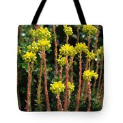 Baby Palm Trees Tote Bag