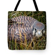 Baby Sage Grouse Tote Bag