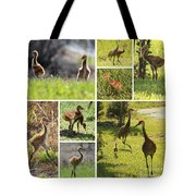 Baby Sandhills Collage Tote Bag
