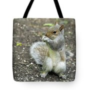 Baby Squirrel Tote Bag