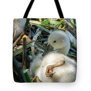 Baby Swan Resting Tote Bag