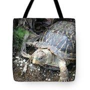 Baby Tortoise Tote Bag