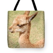 Baby Vicuna Tote Bag