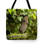Baby Water Vole Stretching Up Tote Bag