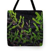 Back-lit Conifer Branches Tote Bag