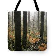 Backlit Bracken Ferns Tote Bag