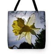 Backlit Daffodil Tote Bag