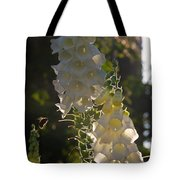 Backlit Foxgloves Tote Bag