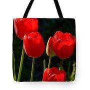 Backlit Red Tulips Tote Bag