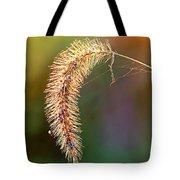 Backlit Seed Head In Fall Tote Bag