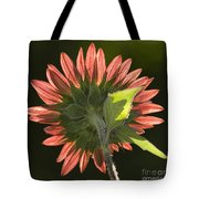 Backlit Sunflower  Tote Bag