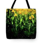 Backlit Tulips Tote Bag