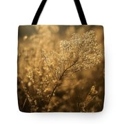 Backlit Wildflower Seeds In Autumn Tote Bag
