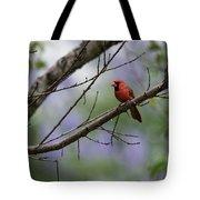 Backyard Cardinal Tote Bag