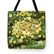 Bacteria On Hops Leaf, Sem Tote Bag