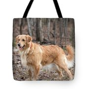 Bailee The Golden Tote Bag