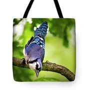 Balanced Blue Jay Tote Bag