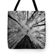 Bald Cypress Sky Tote Bag