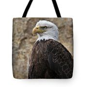 Bald Eagle - Portrait 2 Tote Bag