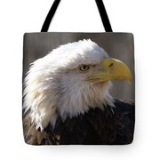 Bald Eagle 3 Tote Bag