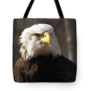 Bald Eagle 5 Tote Bag