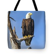 Bald Eagle 6366 Tote Bag by Tommy Patterson