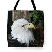 Bald Eagle #8 Tote Bag