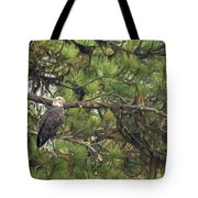 Bald Eagle In A Pine Tree, No. 4 Tote Bag