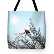 Bald Eagle In A Tree Enjoying The Sunlight Tote Bag