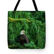 Bald Eagle In Temperate Rainforest Alaska Endangered Species Tote Bag